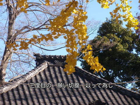 111211-182s 東明寺.jpg