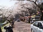 17040918 鎌北湖は桜の名所.jpg