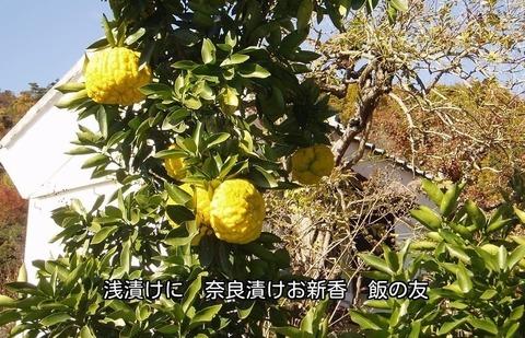 171130-183s 鬼柚子.jpg