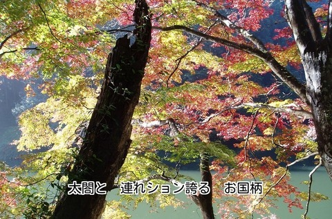 181121-19s 鎌北湖.jpg