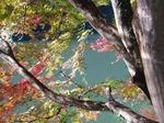 18112155 もみじ祭り 鎌北湖.jpg