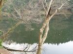 181215170 鎌北湖.jpg