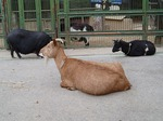 181216011 こども動物自然公園.jpg