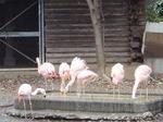 181216047 こども動物自然公園.jpg