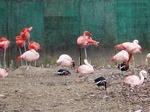 181216048 こども動物自然公園.jpg
