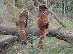 181216058 こども動物自然公園.jpg