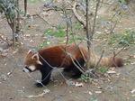 181216067 こども動物自然公園.jpg