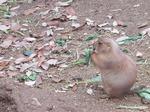 181216071 こども動物自然公園.jpg
