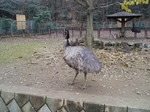 181216106 こども動物自然公園.jpg