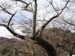 19011814 鎌北湖.jpg