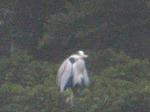19021411 野鳥鎌北湖.jpg