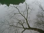 19021415-1 湖面の樹木1.jpg
