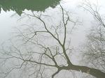 19021415-2 湖面の樹木2.jpg