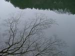 19021416-3 湖面の樹木3.jpg