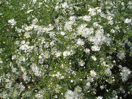 19101503 里の花.jpg