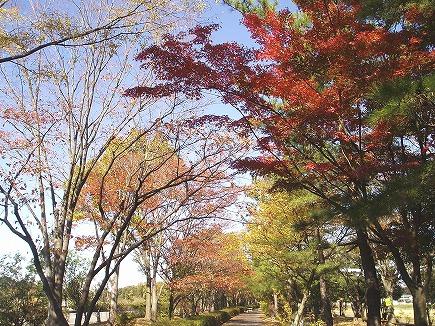 19112105 武蔵丘陵森林公園への歩道.jpg