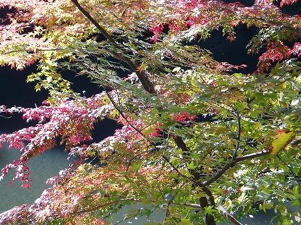 19112202 鎌北湖紅葉.jpg