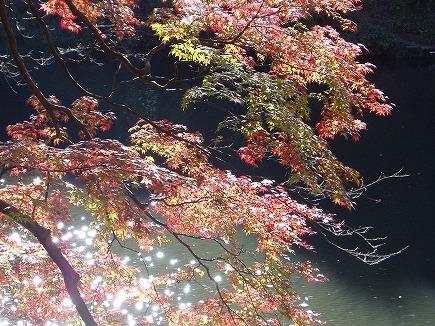 19112229 鎌北湖紅葉.jpg