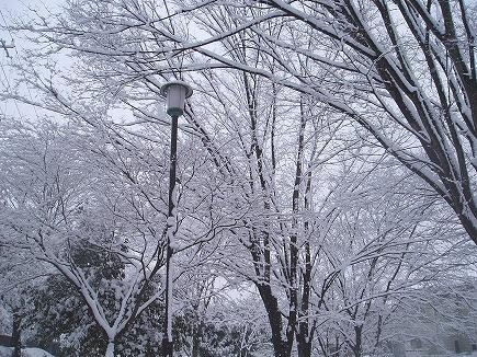 200203104 雪景色.jpg
