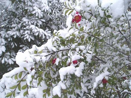 20020392 雪景色.jpg