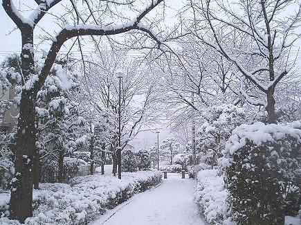 20020396 雪景色.jpg