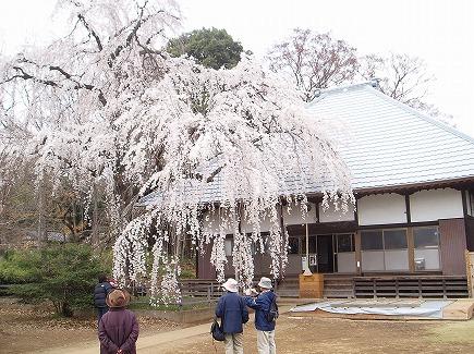 20032874 坂戸慈眼寺.jpg