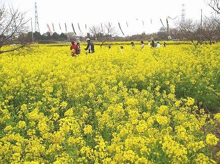 20041355 菜の花まつり.jpg