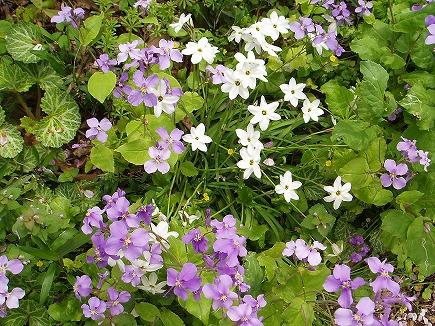 200416152 春の花.jpg