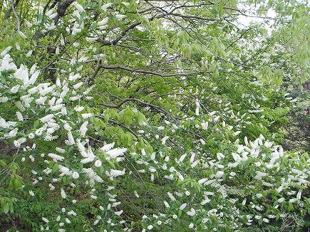20042332 春の花.jpg