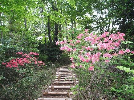200427104 石坂の森.jpg