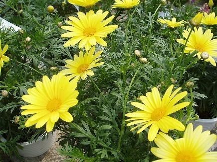 20042924 春の花.jpg
