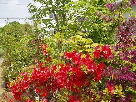 20042930 春の木.jpg