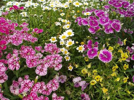 20051226 春の花.jpg