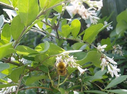 20060480 蜜を集める蜂.jpg