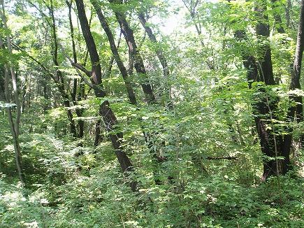 20060601 木漏れ日.jpg