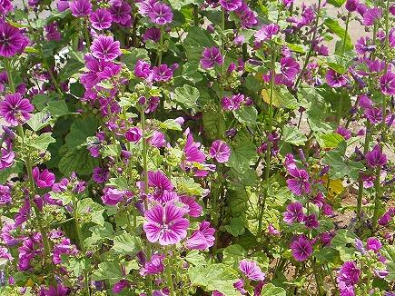 20061031 初夏の花.jpg