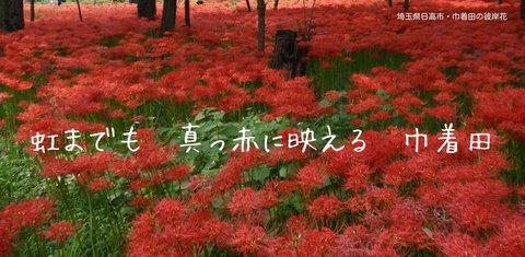 200925-21b 巾着田.jpg
