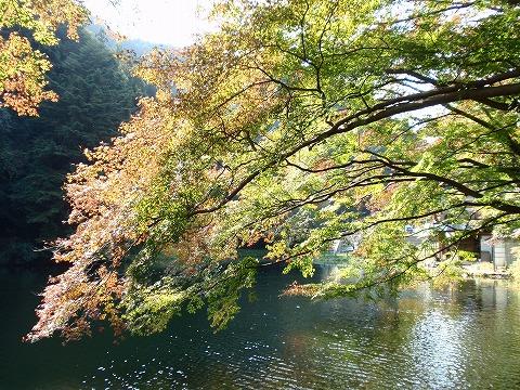 201105-10 鎌北湖の紅葉.jpg
