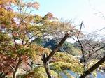 201113-35 鎌北湖.jpg