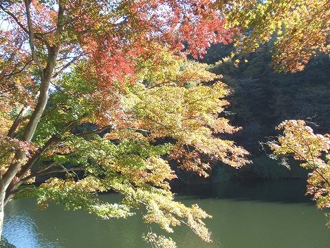 201113-40 鎌北湖.jpg