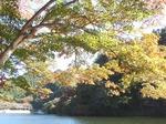 201113-42 鎌北湖.jpg