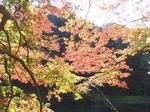 201113-48 鎌北湖.jpg