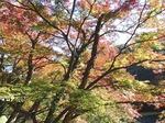 201113-53 鎌北湖.jpg
