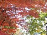 201114-70 八丁湖.jpg