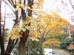 201115-11 緑道.jpg