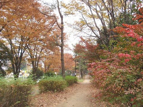 201115-27 滑川森林公園緑道.jpg