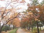 201115-44 緑道.jpg