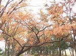 201115-45 緑道.jpg
