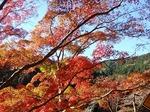 201121-09 鎌北湖.jpg