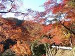 201121-18 鎌北湖.jpg